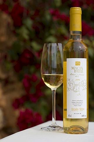 Dessert wine, Blanc de Blancs dolc, Bodega Macia Batle, Majorca, Balearic Islands, Spain, Europe