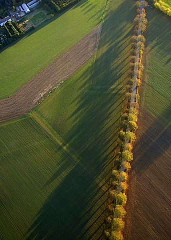 Aerial photo, country road with trees and fields, Werl, Kreis Soest, Soester Boerde, South Westphalia, North Rhine-Westphalia, Germany, Europe