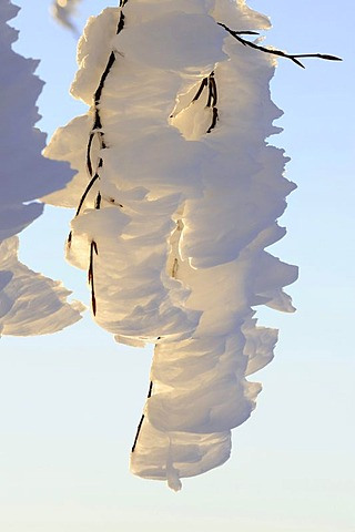 Hoarfrost on the branch of a Beech tree, South Black Forest, Germany, Europe