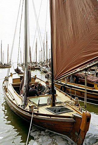 Zees boat regatta, Althagen, Ahrenshoop, Fischland Darss-Zingst, Mecklenburg-Western Pomerania, Germany, Europe