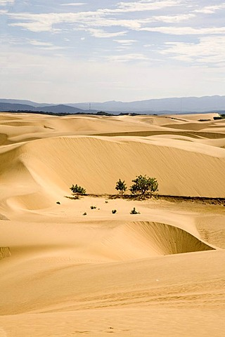 Sand desert on the Istmus de Medanos, excursion destination, Paraguana Peninsula, Venezuela, South America