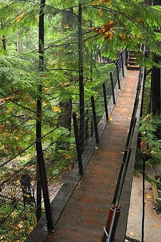 Treetops Adventure walkway at the Capilano Suspension Bridge, tourist attraction, Vancouver, British Columbia, Canada, North America