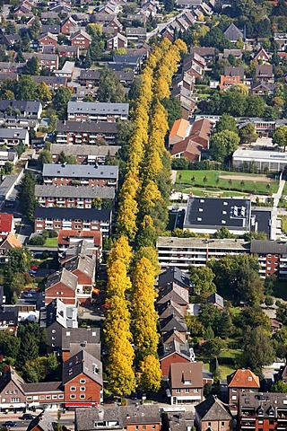 Bodelschwinghstrasse, avenue with autumn coloured trees, Muenster-Hiltrup, North Rhine-Westphalia, Germany, Europe