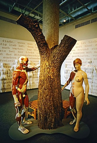 Anatomical male figure and naked female figure standing around a tree with an engraved heart, exhibit in the German Hygiene-Museum, Dresden, Saxony, Germany, Europe