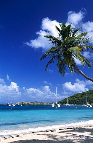 Palm tree on a beach on Peter Island, British Virgin Islands, Caribbean