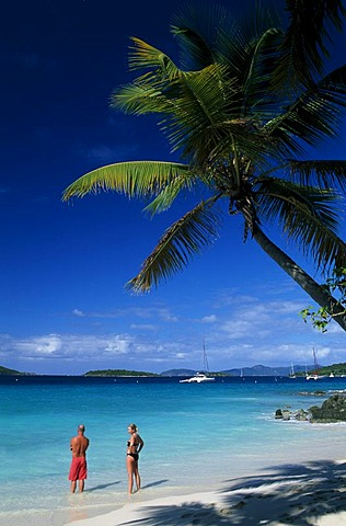 Palm trees on a beach, Solomon Bay, St. John Island, United States Virgin Islands, Caribbean