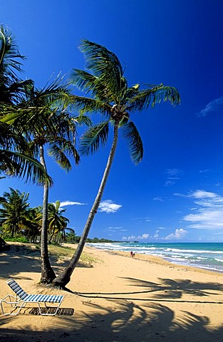 Beach with palm trees, Coco Beach near Rio Grande, Puerto Rico, Caribbean