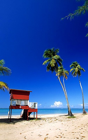 Beach with palm trees, Luquillo Beach, Puerto Rico, Caribbean