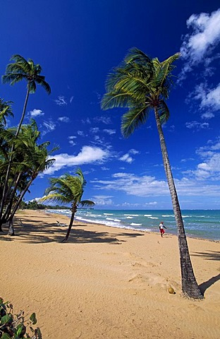 Beach with palm trees, Coco Beach, Rio Grande, Puerto Rico, Caribbean
