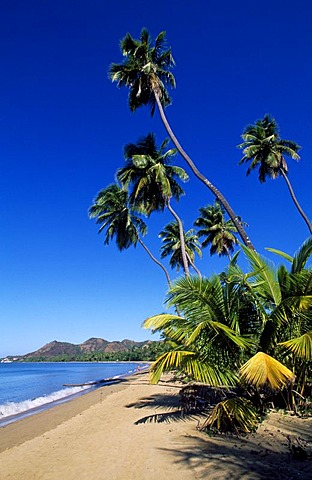 Beach with palm trees, Tres Hermanos Beach, Anasco, Puerto Rico, Caribbean