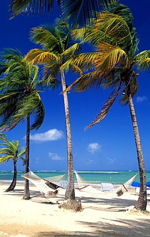 Beach with palm trees near San Juan, Puerto Rico, Caribbean