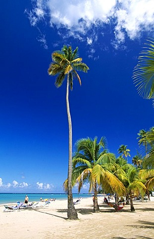 Palms on a beach, Luquillo Beach, Puerto Rico, Caribbean