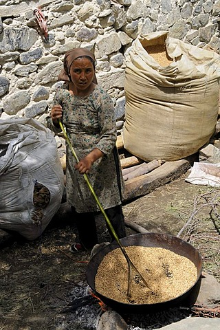 Barley is dried on the fire, roasted, preserved as a winter stock, oasis village Diskit, Nubra valley, Ladakh, India, Himalayas