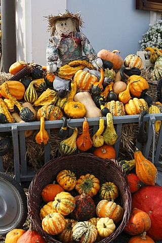 Stall selling pumpkins in Dierpersdorf, Styria, Austria, Europe