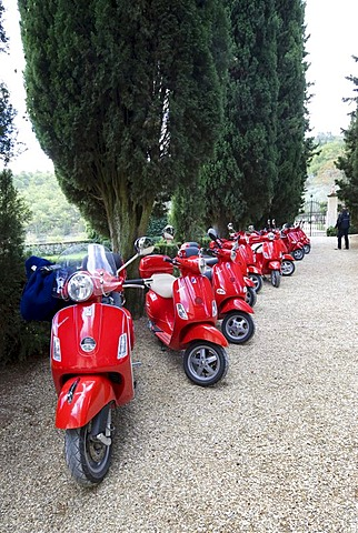 Red scooters on a cypress tree-lined path at the Verrazzano Vineyard, Chianti, Province of Florence, Firenze, Tuscany, Italy, Europe