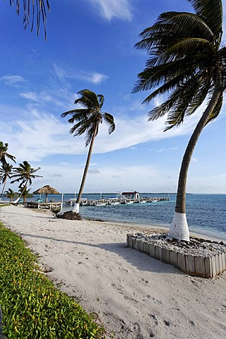 Beach with palm trees and a jetty, Turneffe Flats, Turneffe Atoll, Belize, Central America, Caribbean