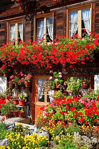 Typical Simmental Valley farmhouse near Erlenbach, Bernese Oberland, Switzerland, Europe