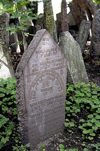Gravestones in the old Jewish cemetery in the Josefstadt, or Josefov quarter of Prague, Czech Republic, Europe