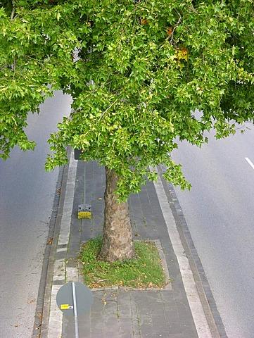 Pedestrian refuge