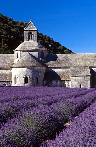 Lavender fields in front of Abbaye Senanque in Gordes, Provence, France