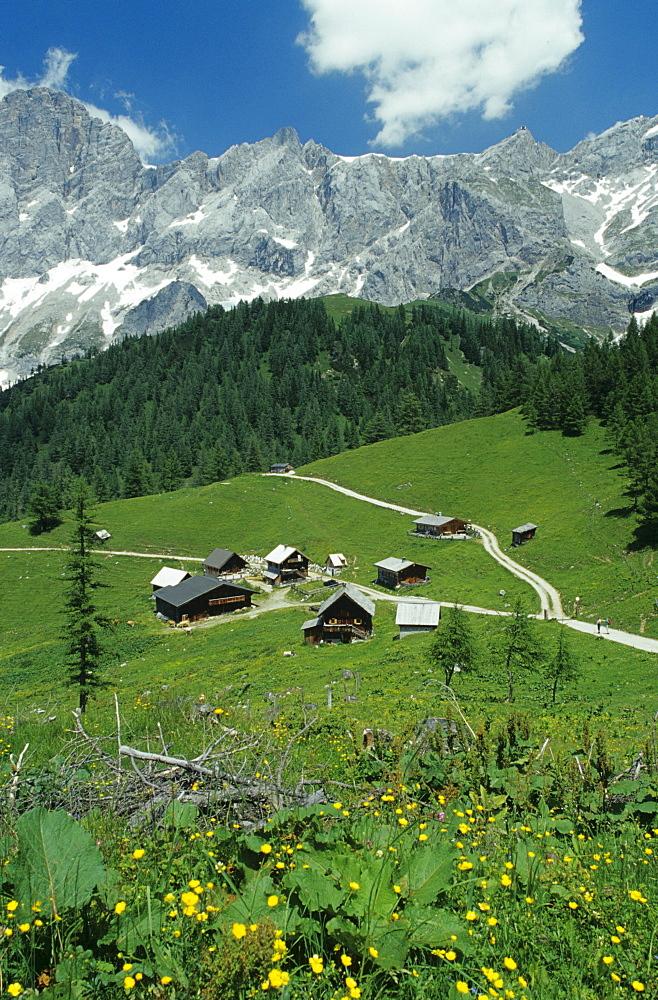 Alpine Pasture at Dachstein, Ramsau, Styria, Austria