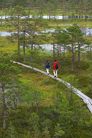 Hikers on a boardwalk through a marsh, Viru Raba, marsh, Lahemaa National Park, Estonia, Baltic States, Northeast Europe