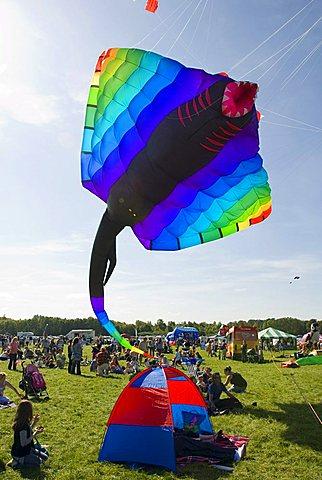 Gigantic kite, stingray, manta, visitors, International Kite Festival, Bristol, England, United Kingdom, Europe