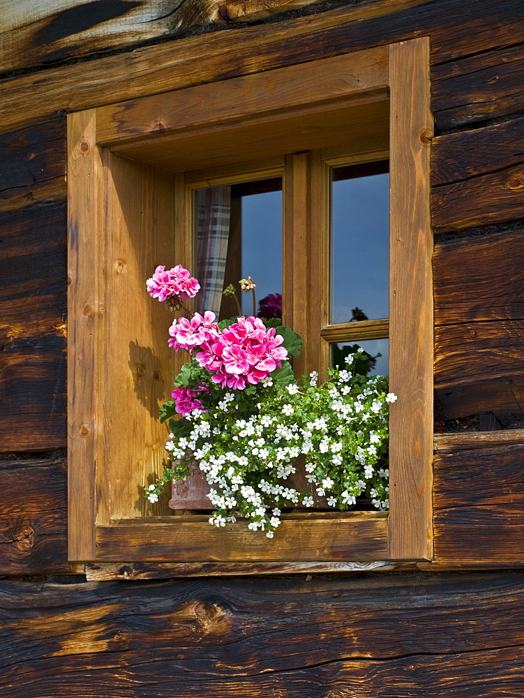 Flowers in front of a window, Grossellmaualm (Grossellmau mountain pasture), Grossarltal (Grossarl Valley), Salzburg, Austria, Europe