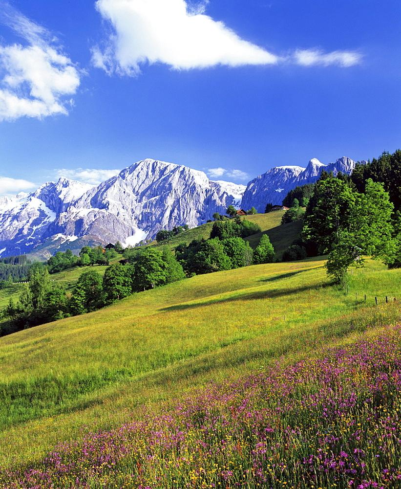 Mt. Bratschenkopf, Mt. Hochkoenig and alpine meadow, Berchtesgadener Alps, Salzburger Land, Austria, Europe