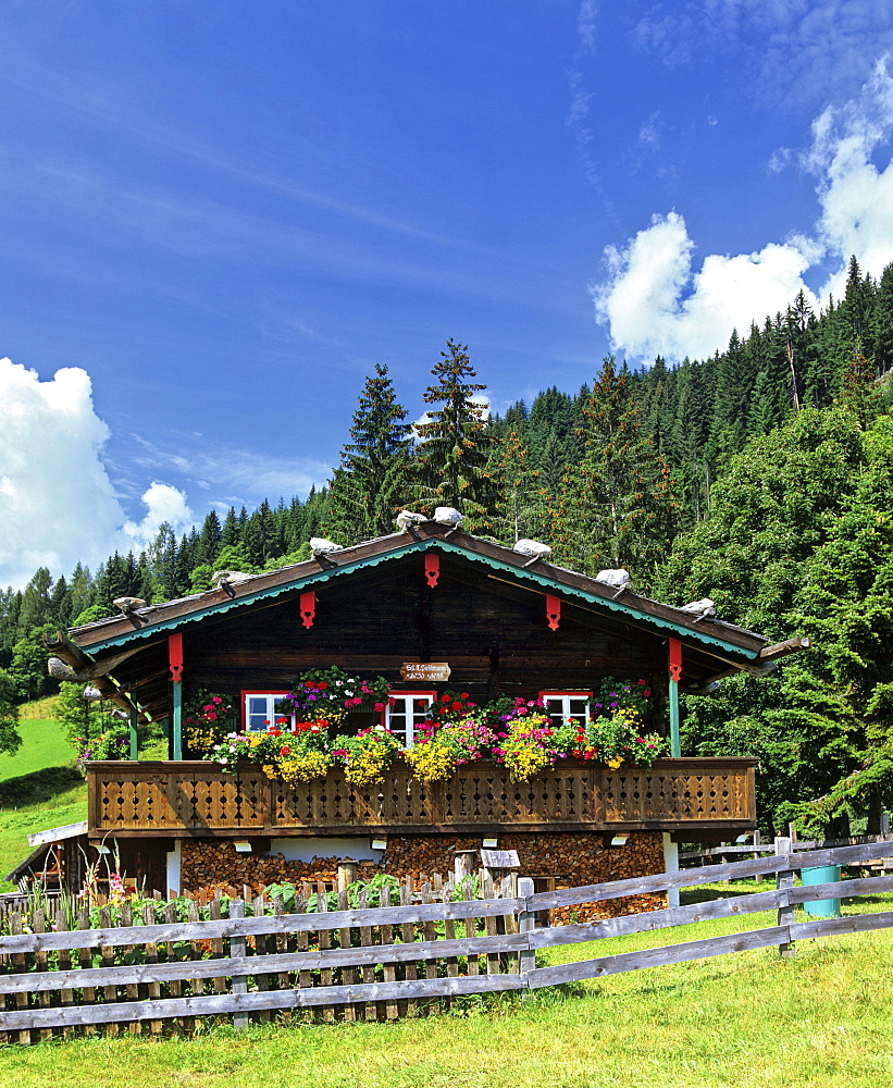 Log cabin with balcony and flower boxes at the edge of the forest in Styria, Austria, Europe