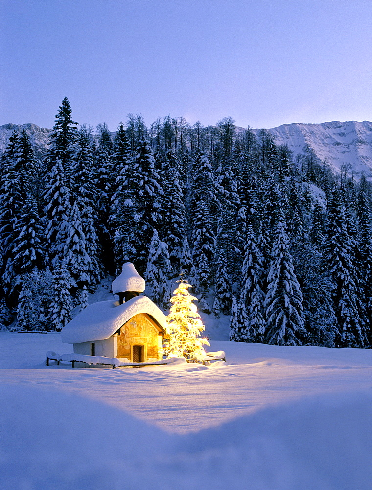 Chapel near Elmau, dusk, snow-covered winter landscape, Christmas tree, Upper Bavaria, Bavaria, Germany