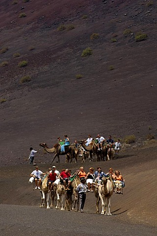 Camel ride in National Park Timanfaya Lanzarote Canaries - 832-337911