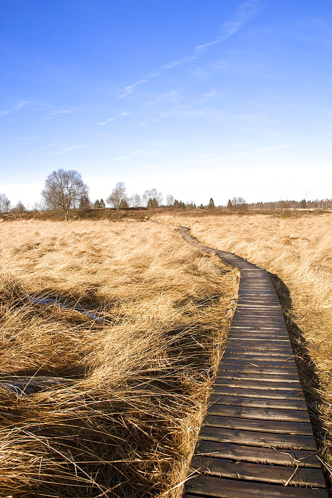 """Frozen boardwalk leading to the visitor information centre in wintertime, Hautes Fagnes (""""High Fens"""") uplands, Liege, Belgium, Europe"""