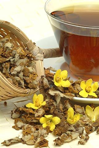 Tea made of great mullein, leaves and blossoms, herbtea, Verbascum densiflora, nigrum, thapsus,