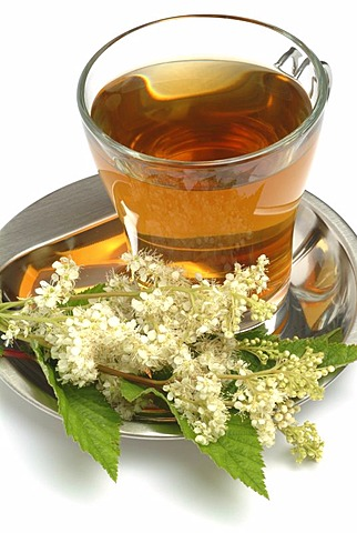 Meadowsweet, herb tea, Filipendula ulmaria, Olmario