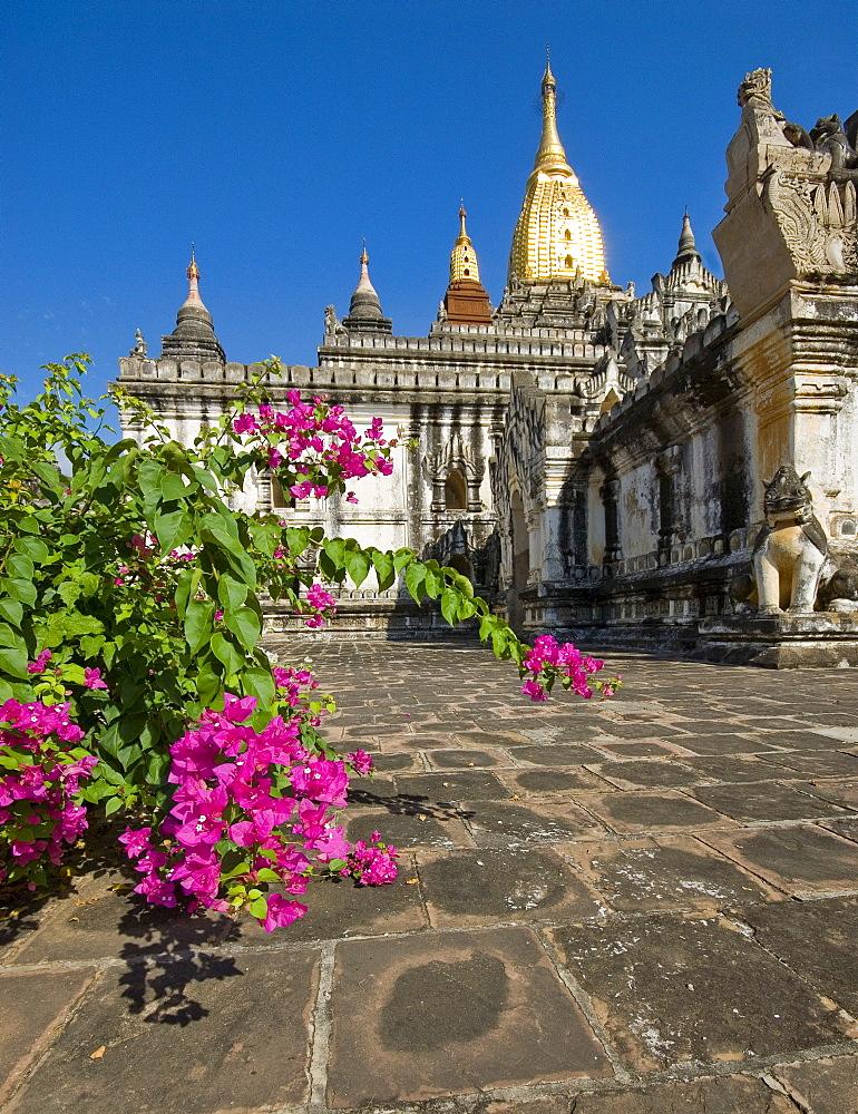 Ananda Temple, flowers, Bagan, Myanmar, Southeast Asia