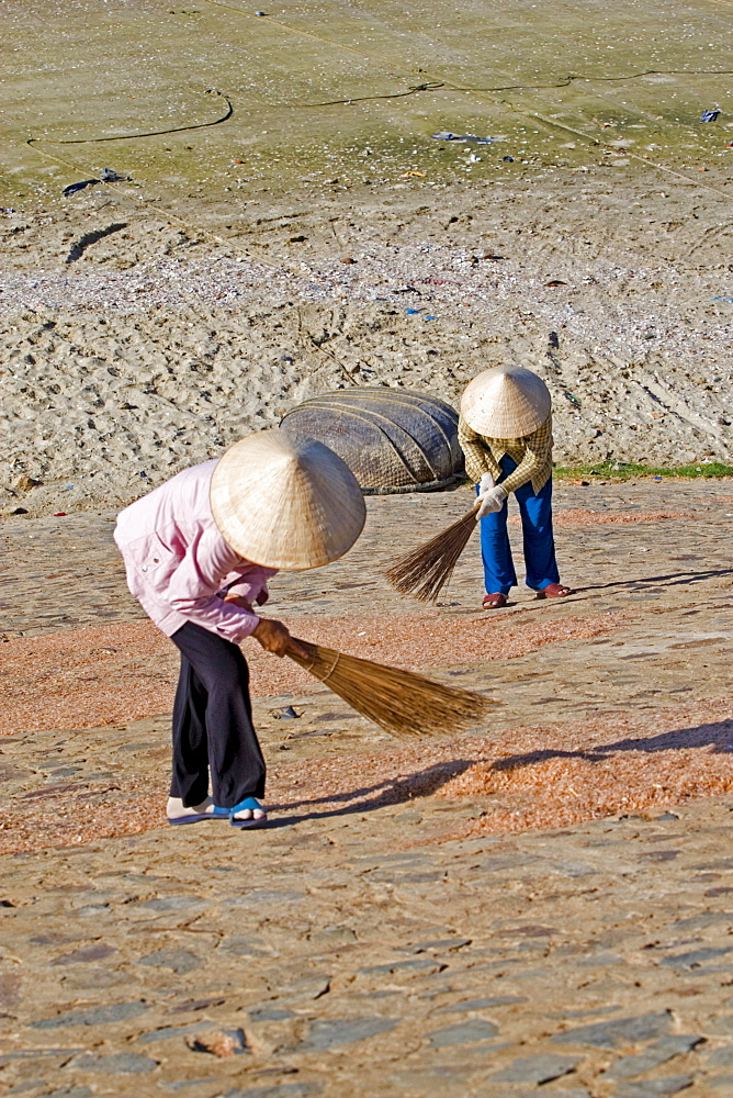 Two Vietnamese women are turning around prawns, Mui Ne, Vietnam, Asia