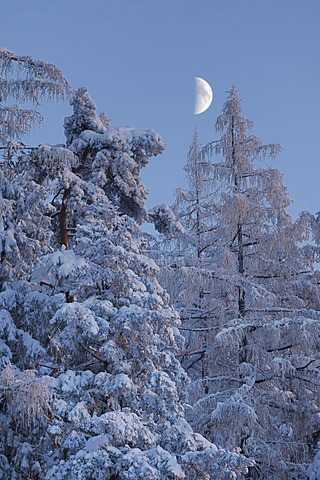 Wintry atmosphere shortly before sunset, waxing moon, Mt. Zugerberg, Switzerland, Europe