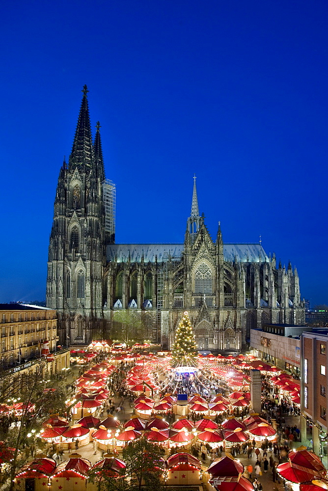 Illuminated christmas market and christmas tree in front of Cologne Cathedral, North Rhine-Westphalia, Germany, Europe