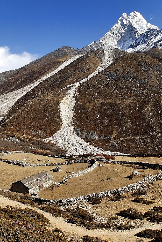 Yak alp at Dudh Koshi valley with Ama Dablam (6856), Khumbu Himal, Sagarmatha National Park, Nepal