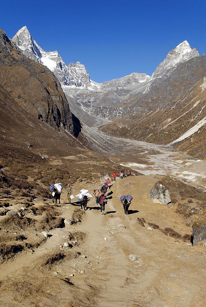 Yak caravane obove Machhermo Sherpa village (4410), Sagarmatha National Park, Khumbu Himal, Nepal