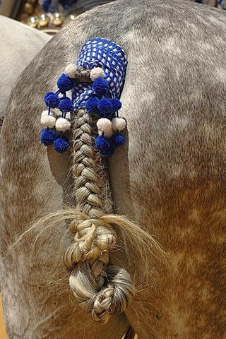 Decorated horse , Feria de Caballo , Jerez de la Frontera , Cadiz , Andalusia , Spain , Europe