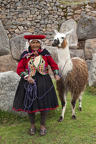 Elderly Peruvian woman with a traditional costume and a Llama, Saqsaywaman near Cuzco, Peru, South America