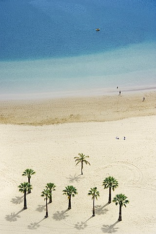 Bird's eye view, palm trees and beach, Playa de las Teresitas, San Andrés, Tenerife, Canary Islands, Spain, Europe
