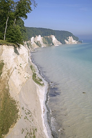 Chalk cliffs and a beech forest (Fagus sylvatica), UNESCO World Heritage site, Jasmund National Park, Ruegen, Rugia, Mecklenburg-Western Pomerania, Baltic Sea, Germany, Europe