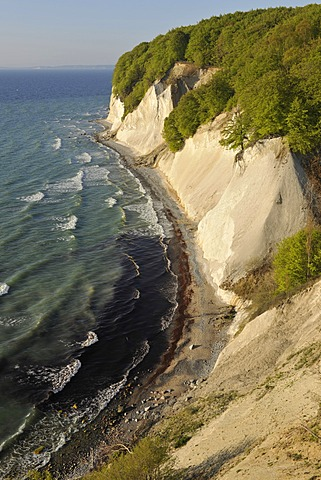 Chalk cliffs and a forest of European Beech (Fagus sylvatica), UNESCO World Natural Heritage Site, lookout point called Ernst-Moritz-Arndt-Sicht, Jasmund National Park, Ruegen, Mecklenburg-Western Pomerania, Baltic Sea, Germany, Europe