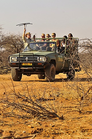Tracking of cheetahs with radio collars with an aerial on the grounds of the Okonjima guest farm, Namibia, Africa