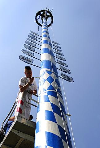Erection of a maypole, Eurasburg, Upper Bavaria, Bavaria, Germany, Europe
