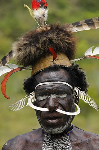 Dani warrior with boar's teeth and headdress, Yiwika, Baliem Valley, Irian Jaya, West Guinea, New Guinea, Indonesia, Southeast Asia, Asia