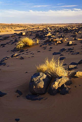 Light and shadows in the Libyan Desert, rocky desert, Libya, Sahara, North Africa, Africa
